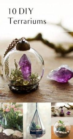 10 DIY Terrariums -