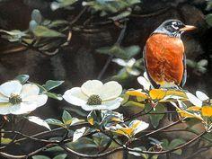 Backyard Robin