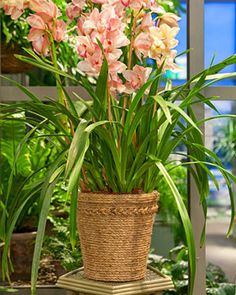 """It's a wrap. Martha Stewart shows you how to use 1/4"""" thick rope (sisal, jute, hemp, or natural manila) to make an attractive cachepot for your favorite plant. Grab a glue gun and click through for the how-to."""