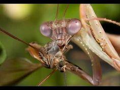 ▶ Organic Pest Control for Home & Garden - YouTube