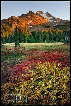 ✯ Jefferson Park Wilderness, Oregon