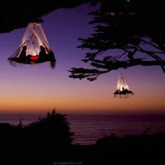 Tree camping on the Pacific Coast