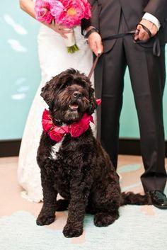 Including Pets in Your Wedding Ceremony - WSJ.com | cuu du lieu, cap cuu du lieu, phuc hoi du lieu, khoi phuc du lieu, cứu dữ liệu, cấp cứu dữ liệu, phục hồi dữ liệu, khôi phục dữ liệu, cuu du lieu tran sang, cứu dữ liệu trần sang, cong ty cuu du lieu tran sang, công ty cứu dữ liệu trần sang | http://cuudulieutransang.wix.com/trangchu