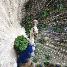 beauti bird, eleg creatur, half side