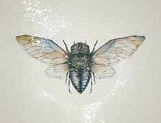 cicada tattoo for the buggy