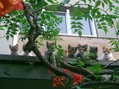 Kitties living on the edge #pet #cat #kitty #cat #kitty