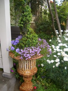 A spiral topiary surrounded by purple flowers fills a vintage urn by my front door