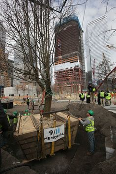 WTC survivor's tree~read the caption from the link, its very uplifting!