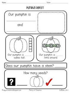 PLENTY OF PUMPKINS kindergarten math, educationschool stuff, fallhalloweenthanksgiv craft, pumpkins, kindergarten idea, pumpkin classroom activities, octob school, math idea, preschool
