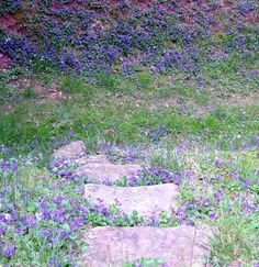 Path through the Wild Violets