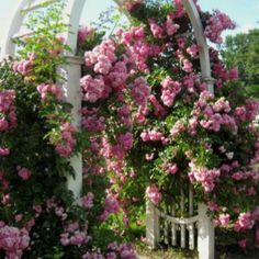 climbing rose trellis plans submited images rose trellis plans free woodworking diy plan