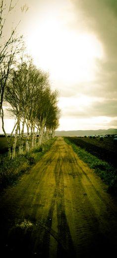 dirt roads, the road