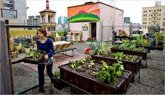 A rooftop garden in San Francisco
