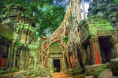 Fancy - Ta Prohm Temple, Angkor, Siem Reap, Cambodia