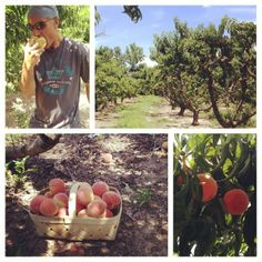 time start, peach pick, greenville sc, greenvill sc