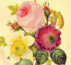 Rose Anemone Clematis Flower Bouquet Vintage Illustration Wildflower Lithograph Poster By Redoute