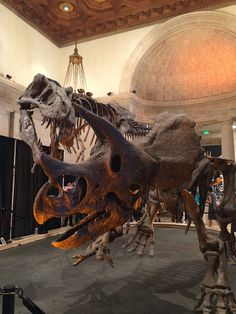 Exploring Nature at the Natural History Museum of Los Angeles County!