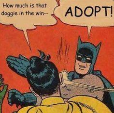 Adopt! Or I swear I'll slap you silly!