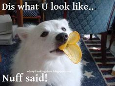 Oh My Freaking Stars!: Dogface Duckface