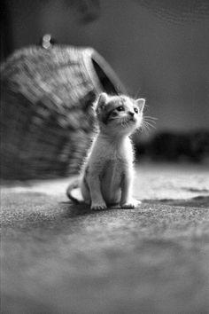 Awww...poor little guy. #kittehs