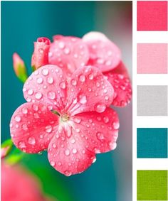 Spring or Summer color palette Color Palette - Paint Inspiration- Paint Colors- Paint Palette- Color- Design Inspiration: I could see these colors in the girls bathroom. So bright, cheery and girly.
