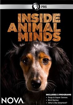 Explores how animals understand the world around them through the eyes of three iconic creatures: dogs, birds, and dolphins. As we discover how scientists are pushing the animal mind to its limits, we'll uncover surprising similarities to, and differences from--the human mind.  180 min.  http://highlandpark.bibliocommons.com/search?utf8=%E2%9C%93t=smartsearch_category=keywordq=inside+animal+mindscommit=Searchformats=DVD