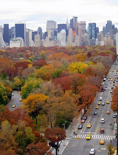 central park west in fall November 2011