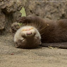 Das otter haus photos | Otter Loves Leaves | The Daily Otter