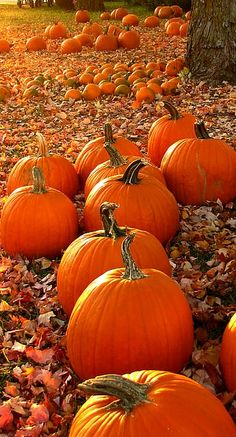 pumpkins....they make me smile and evoke Fall sentiment. Buy an extra for Thanksgiving to carve with leaf patterns or a turkey.