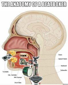 Anatomy of Beatboxer
