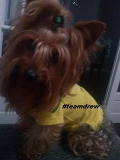That's one stylish pup =) #TeamDrew