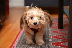 This looks like a happy #dog! #cute #adorable #puppy #pets