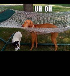 animals stuck in bad situations, dog stuck in hammock