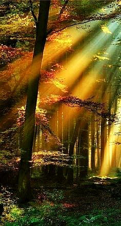 lights, forests, nature, tree, germany, sunlight, place, black, sun rays