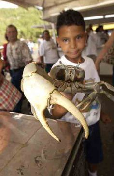 Guanica Crab Festival