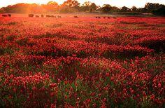 field of flowers.
