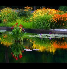 Flowers and reflections (Forest Park St. Louis Missouri)