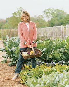 Martha's Vegetable Garden Tips