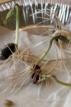 Seed Sprout Prediction ~ Spring Science Experiment