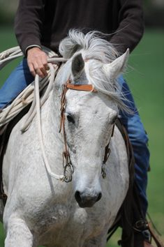 A great article written by our friend Jonathan Field Horsemanship. Jonathan used to study under Pat #Parelli  and his mentors include Pat and Ronnie Willis!