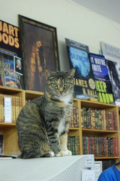 Teacup at Haslam's Bookstore, St. Petersburg, Fl
