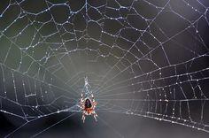 Tela de araña, lineas en la naturaleza.