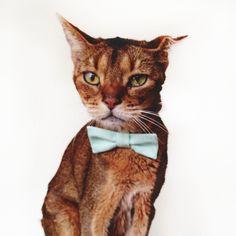 Bow Tied Cat