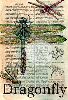 PRINT:  Dragonfly Mixed Media Drawing on Distressed, Dictionary Page Could do whole series of things like this