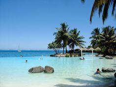 palms in ocean