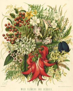Chromolithograph - Wild flowers and berries