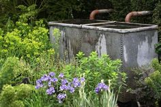 The M Garden - Chelsea Flower Show 2010: Great ideas for small gardens
