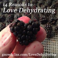 14 Reasons to Love Dehydrating Foods