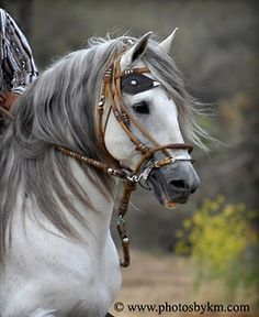 Beautiful #horse