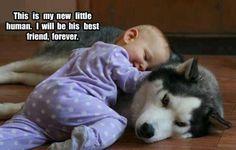 my little human